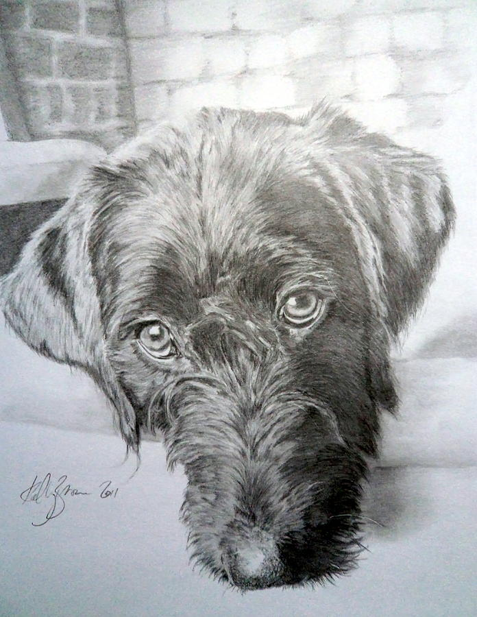 696x900 Labradoodle Drawing By Skyrah Saunders