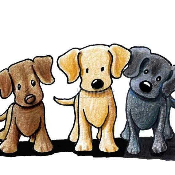 570x570 Labrador Retrievers By Kim Niles Kim Niles' Art