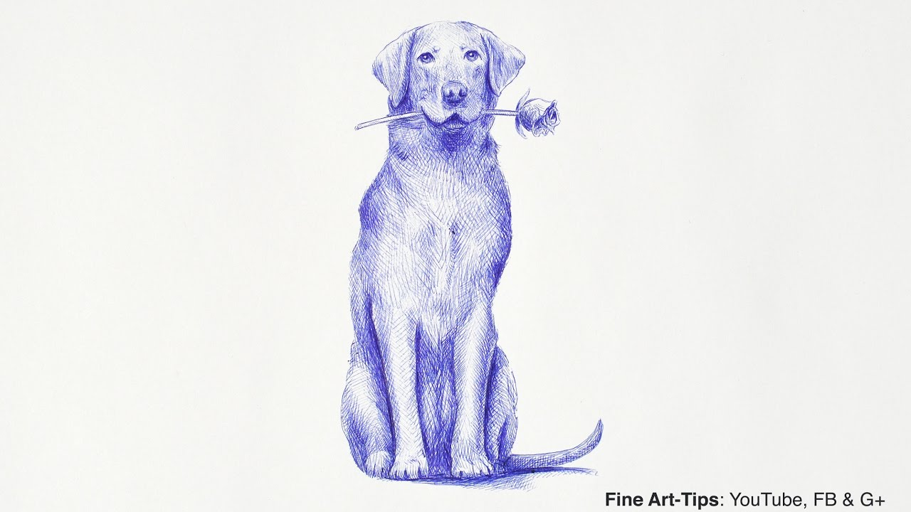 1280x720 How To Draw A Labrador Retriever Dog