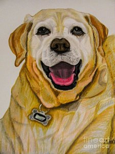 225x300 Labrador Retriever Drawings Fine Art America