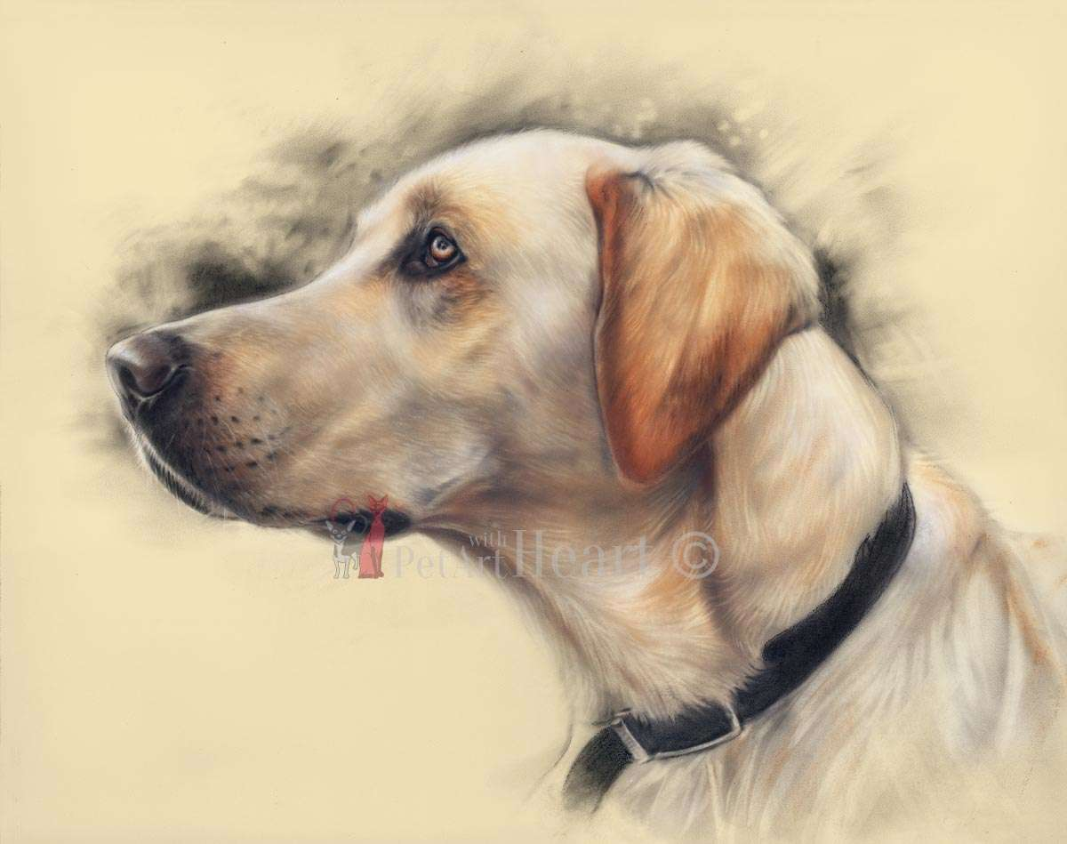 1200x949 Rookie Yellow Labrador Retriever Portrait In Pastel