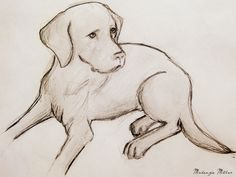 236x177 Drawing Labradors How To Draw Labradors