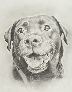 236x303 How To Draw A Labrador Puppy Step By Step Labrador Retriever