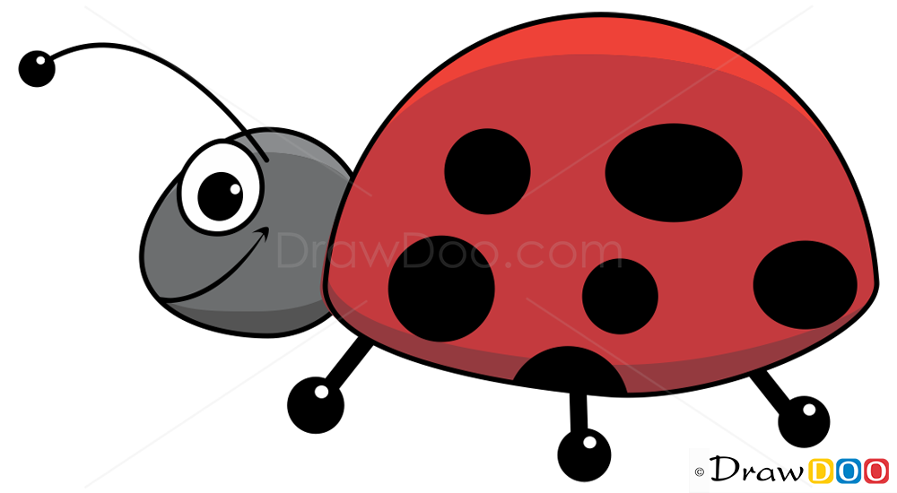 1000x550 How To Draw Ladybug, Insects