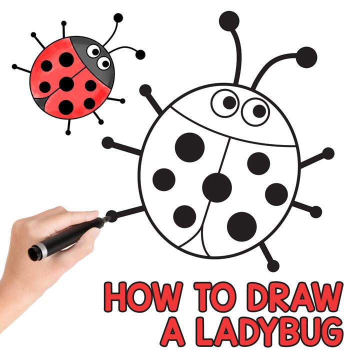 700x700 How To Draw A Ladybug