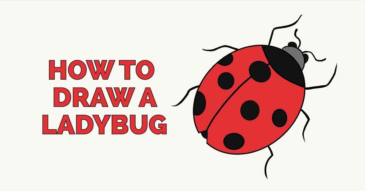 1200x628 How To Draw A Ladybug