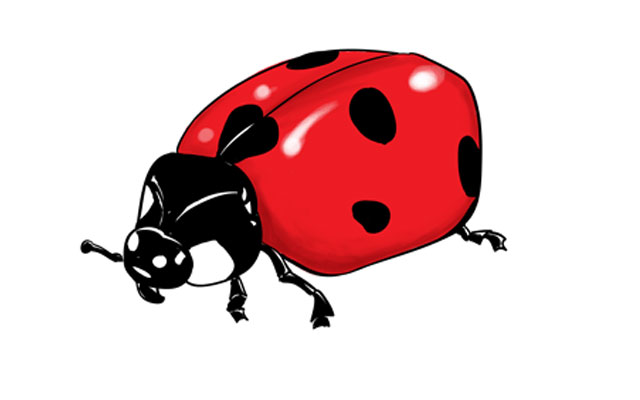 640x400 How To Draw A Ladybug Sketchbook Challenge 44