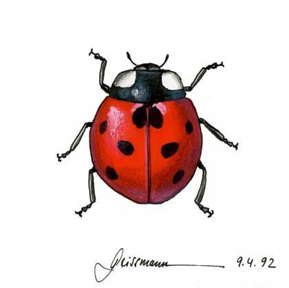 420x418 Ladybug Drawing