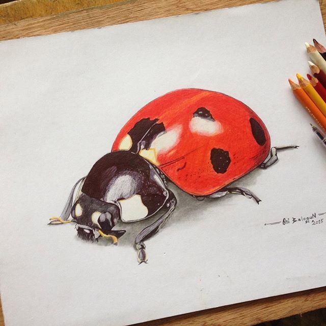 640x640 Ladybird 3d Drawing 54artistry