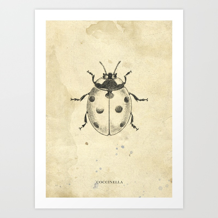 700x700 Ladybird Pencil Drawing Art Print By Hedera Society6