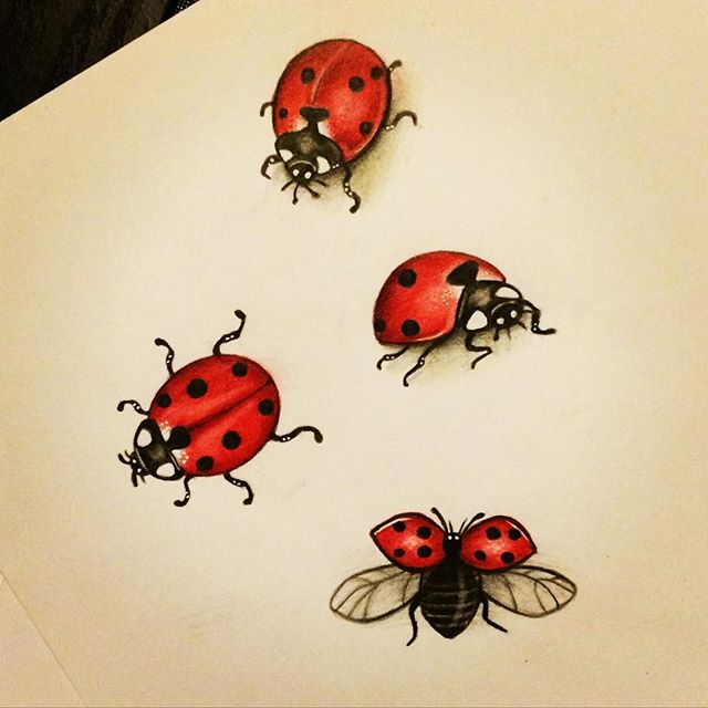 640x640 Ladybug Art Artwork On Instagram Tattoos Ladybug