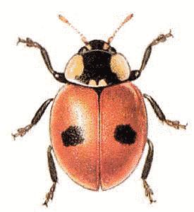275x300 Realistic Lady Bug Drawing