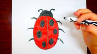 320x180 How To Draw A Ladybug! Easy Cartoon Lady Bug Tutorial