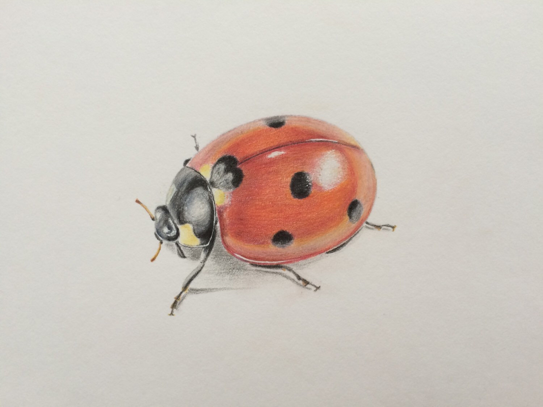 1500x1125 Drawn Ladybug Realistic