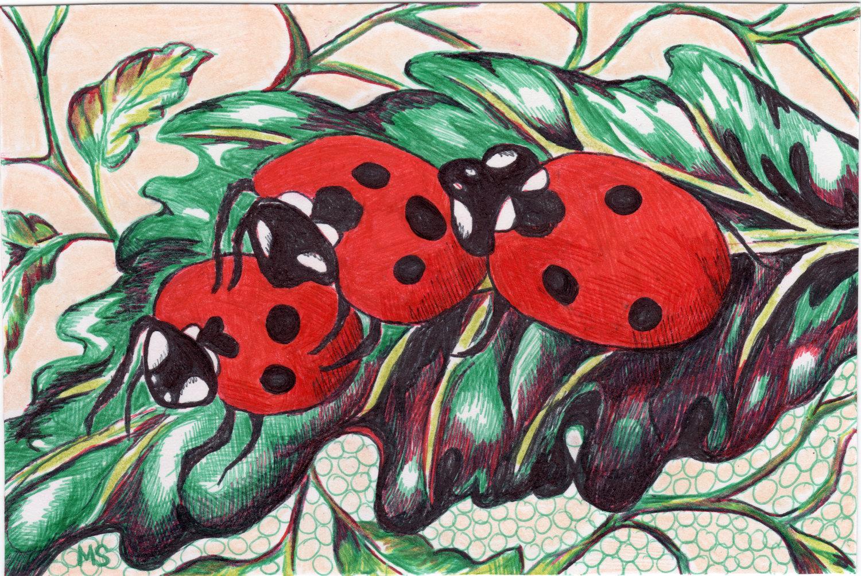 1500x1004 Popular Items For Ladybug Drawing On Etsy