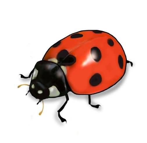 505x490 Famous Ladybug Tattoo Design Incredible