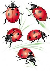 213x300 Ladybug Art Artwork On Instagram Tattoos Ladybug