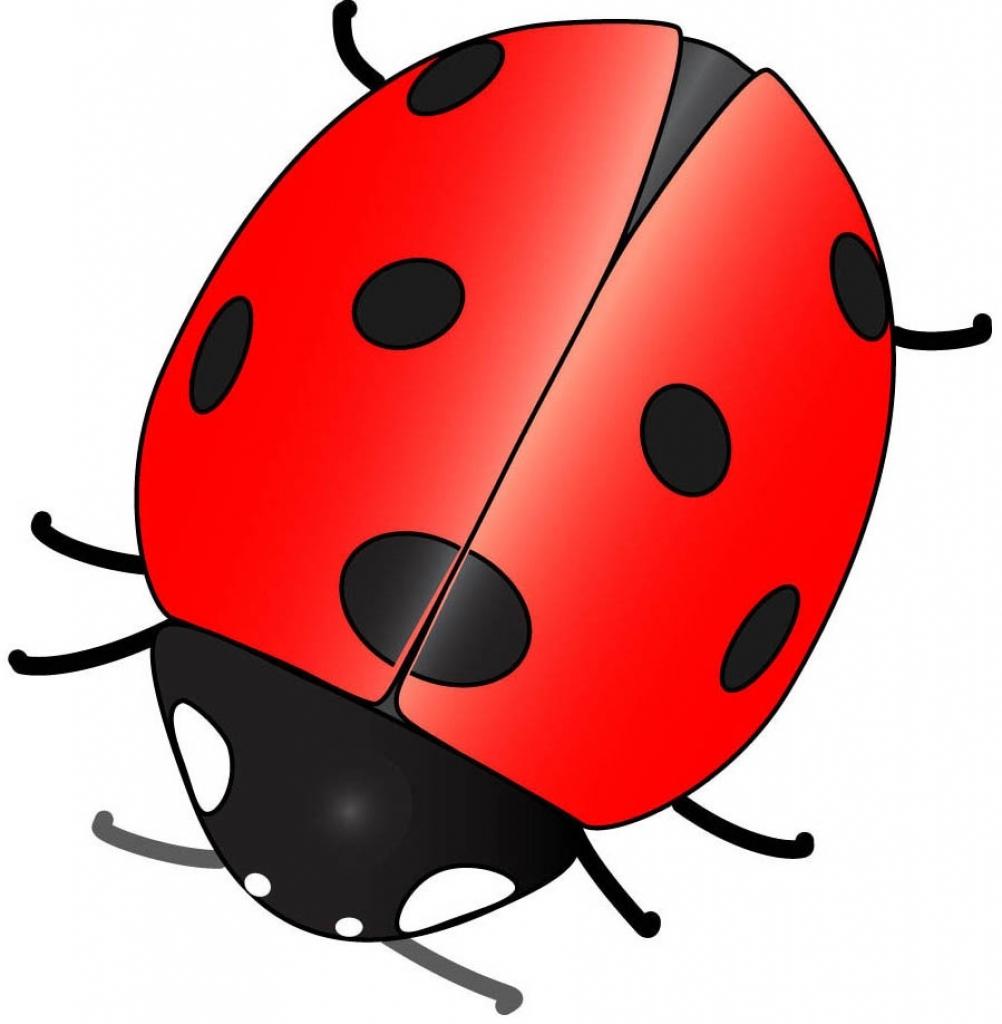 1002x1024 Cartoon Ladybugs Drawings Cartoon Ladybugs Drawings