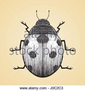 300x320 Cartoon Hand Drawing Beetle Ladybug Caterpillars, Leaves