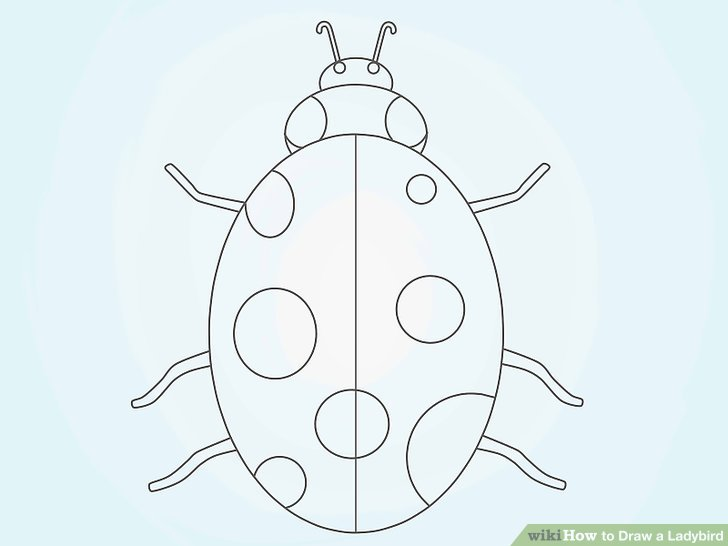728x546 How To Draw A Ladybird 8 Steps (With Pictures)