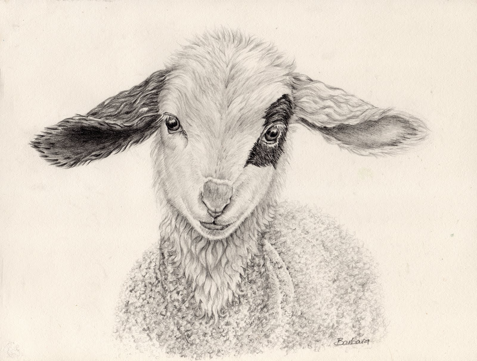 Line Drawing Of Sheep Face : Lamb drawing at getdrawings free for personal use