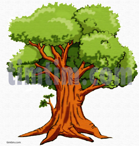 571x597 Free Drawing Of An Oak Tree From The Category Climate Amp Nature