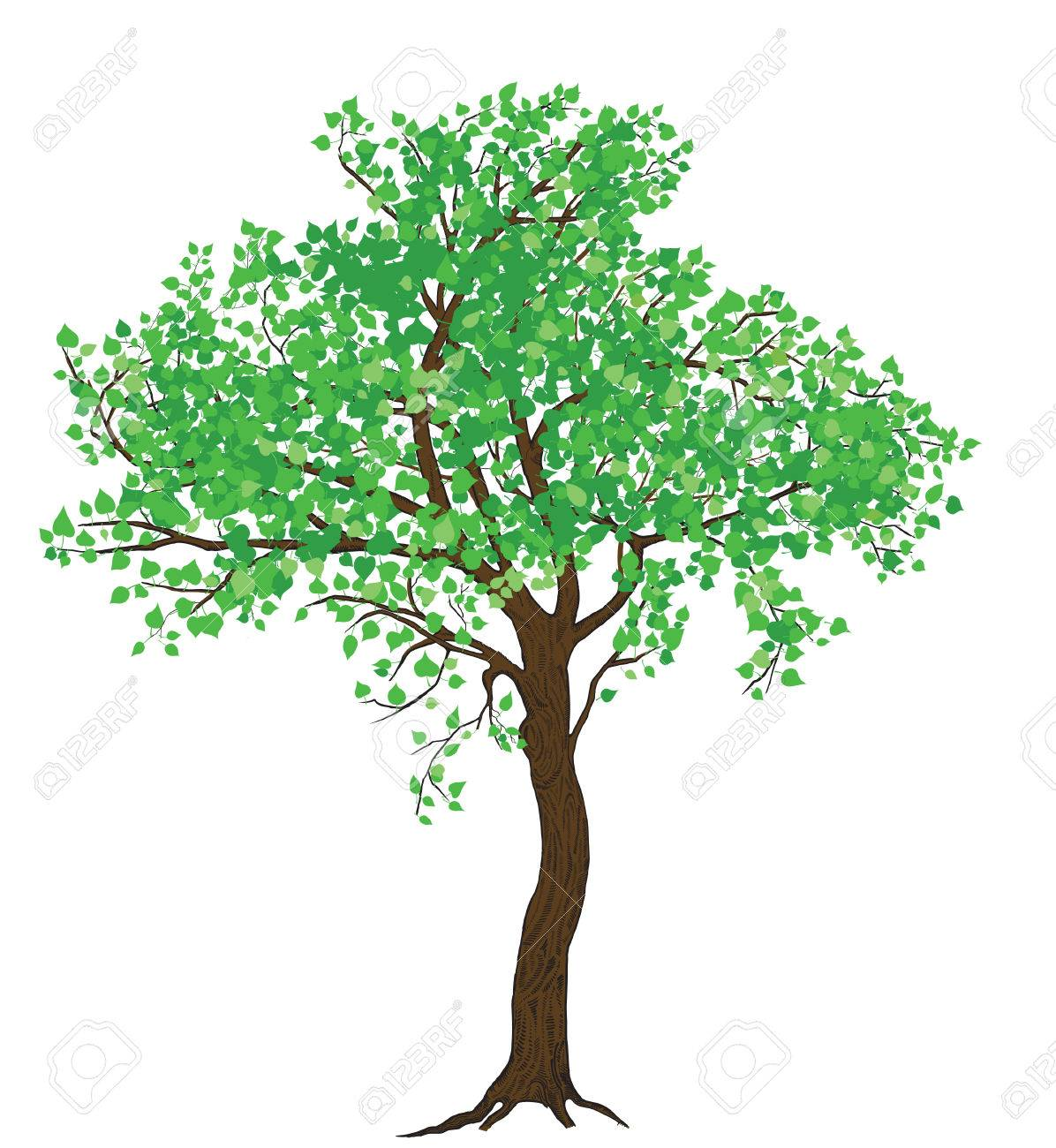 Large Tree Drawing at GetDrawings.com | Free for personal use Large ...