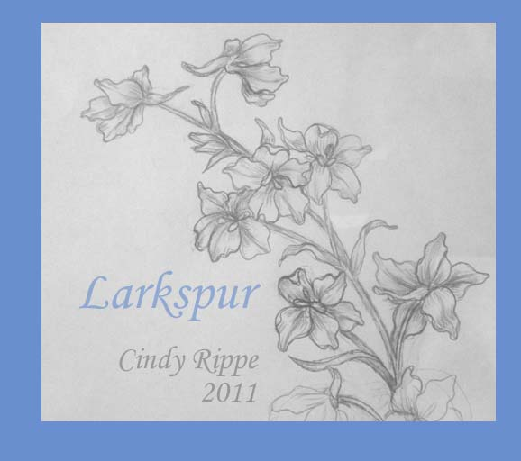 578x512 Art In Entertaining By Cindy Rippe Sketching Larkspur
