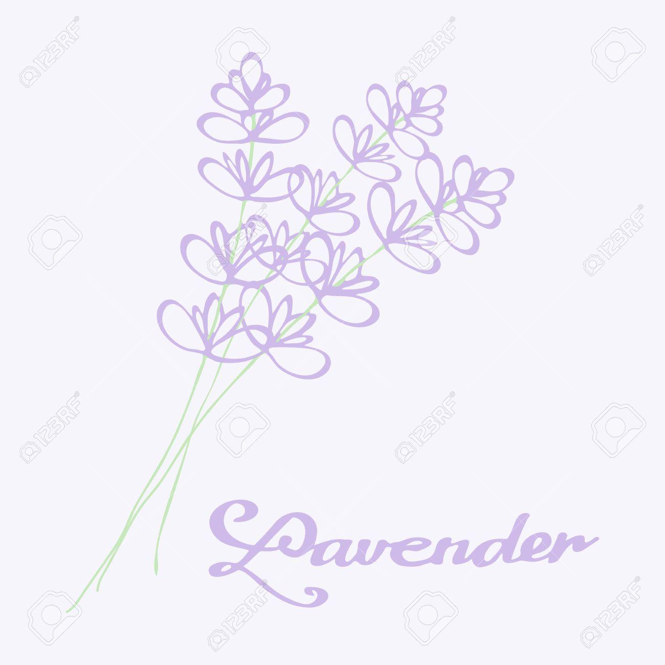 1300x1300 Lavender Bouquet. Hand Drawn Flowers