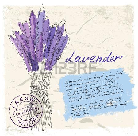 450x441 Lavender Pencil Drawing Vector Set Royalty Free Cliparts, Vectors