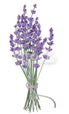 230x380 Realistic Lavender Bouquet Drawn With Gradient Mesh. Vector Art