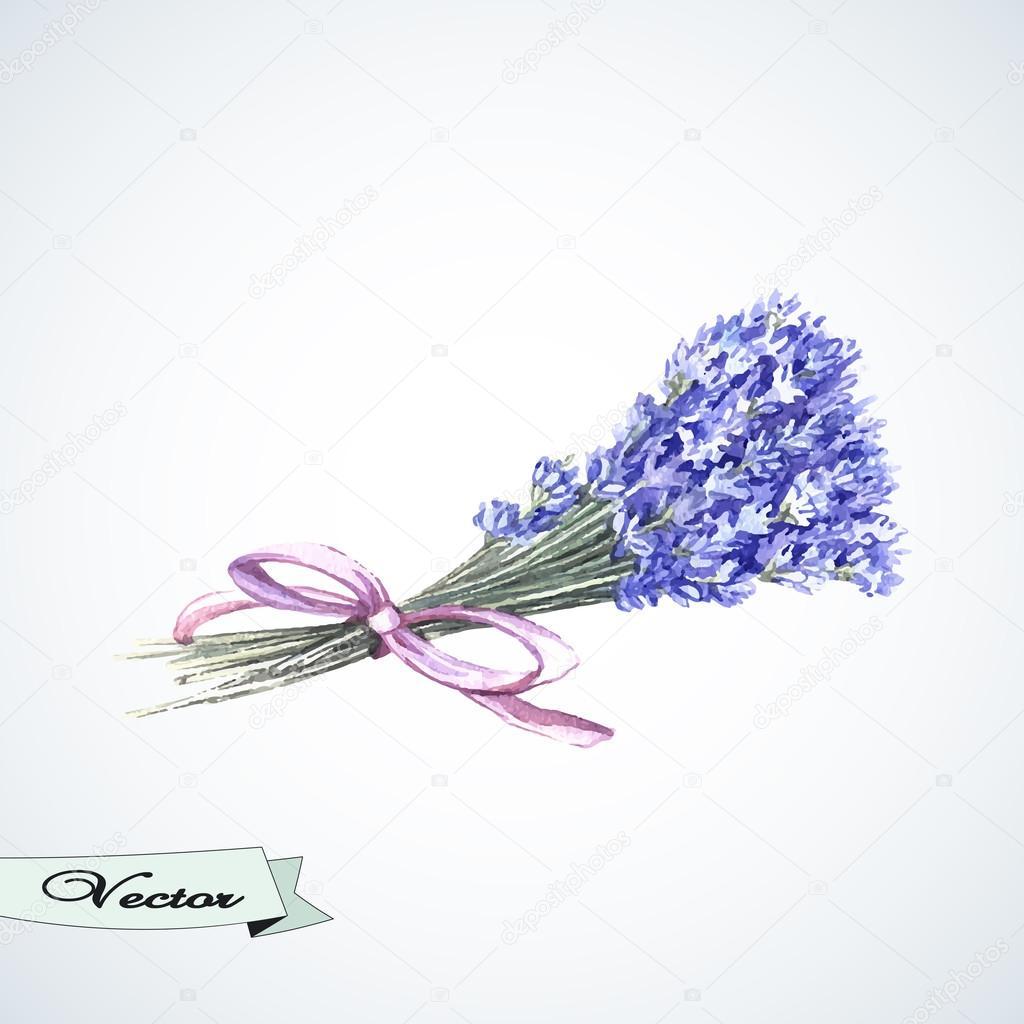 1024x1024 Watercolor Bouquet Of Lavender. Stock Vector Ann Art