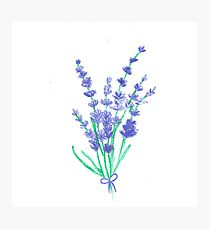 210x230 Flower Lavender Pastel Drawing Photographic Prints Redbubble