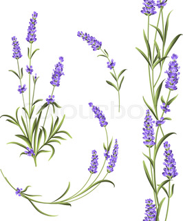 266x320 Isolated Clipart Of Plant Lavender On White Background. Botanical