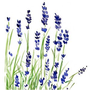 300x300 Lavender Plant Art Print Of Original Watercolor Painting ,purple