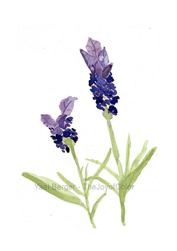 570x807 Art Print Lavender Lavender Watercolor Botanical Print