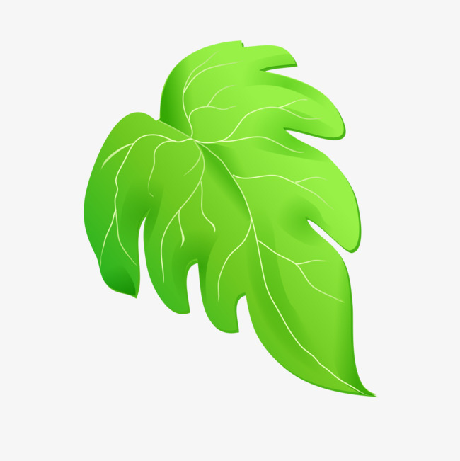 650x651 Green Leaves Cartoon Drawing, Cartoon Green, Green Png Image