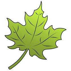 250x250 How To Draw A Leaf