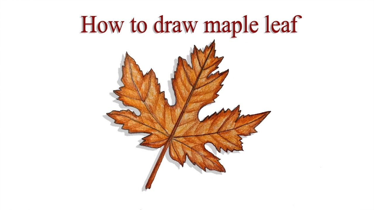 1280x720 How To Draw Maple Leaf Step By Step (Very Easy)