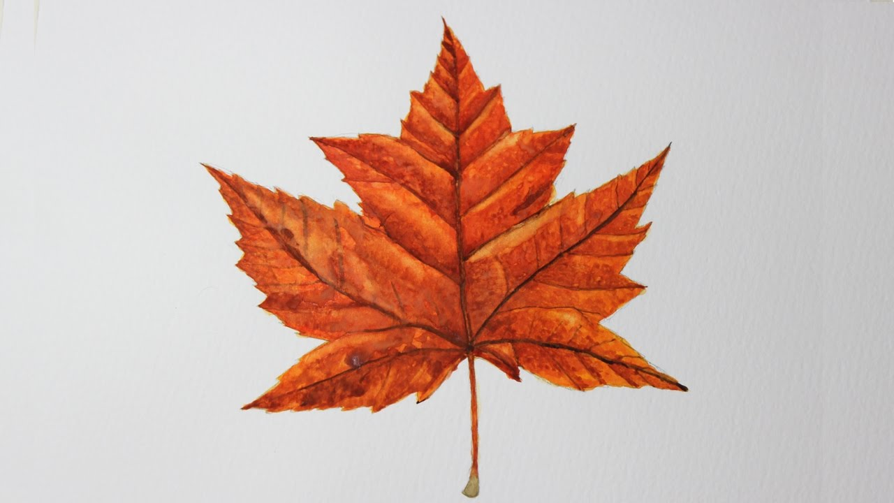 1280x720 Water Colour Drawing Of A Maple Leaf (My 1st Attempt)