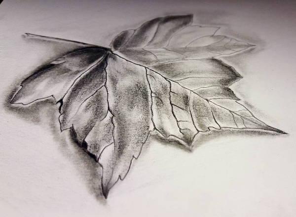 600x440 Leaf Drawings
