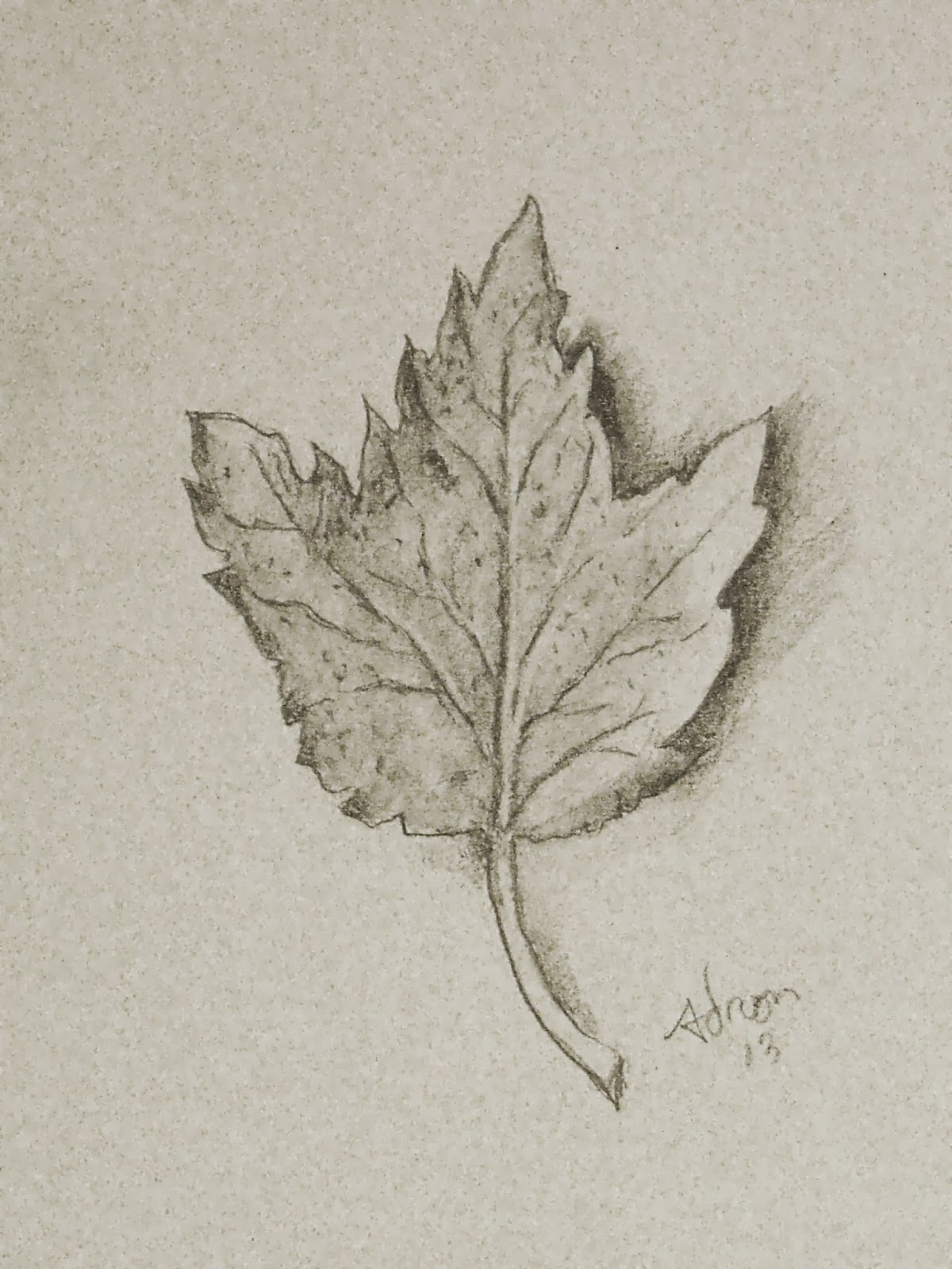 1200x1600 Artist Adron Pencil Sketch Of Wilted Autimn Leaf