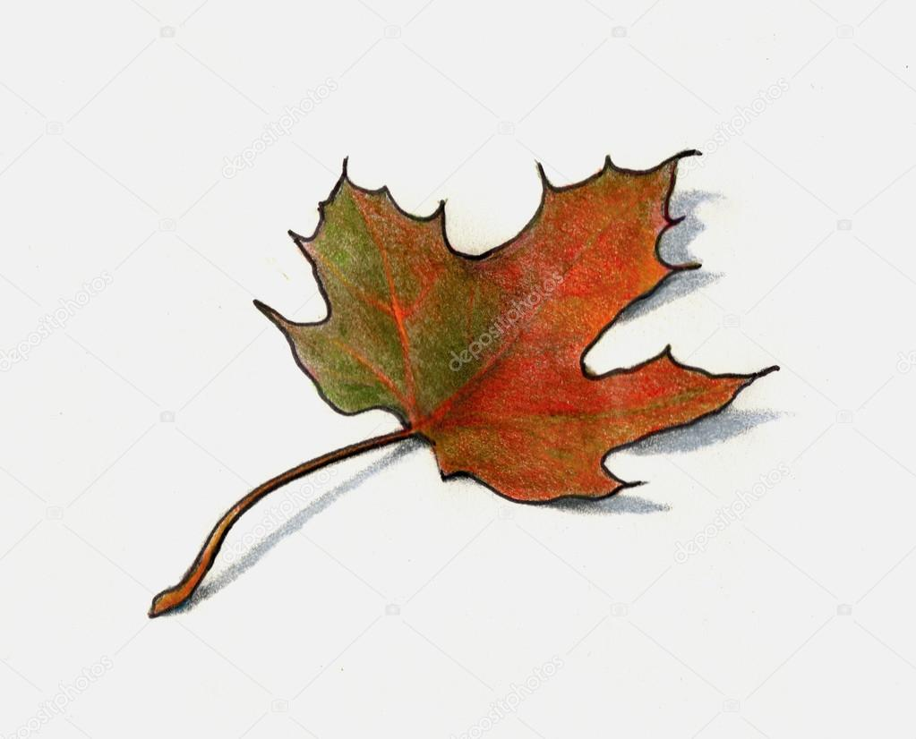 1023x826 Color Pencil Drawing Of Maple Leaf In Autumn Stock Photo
