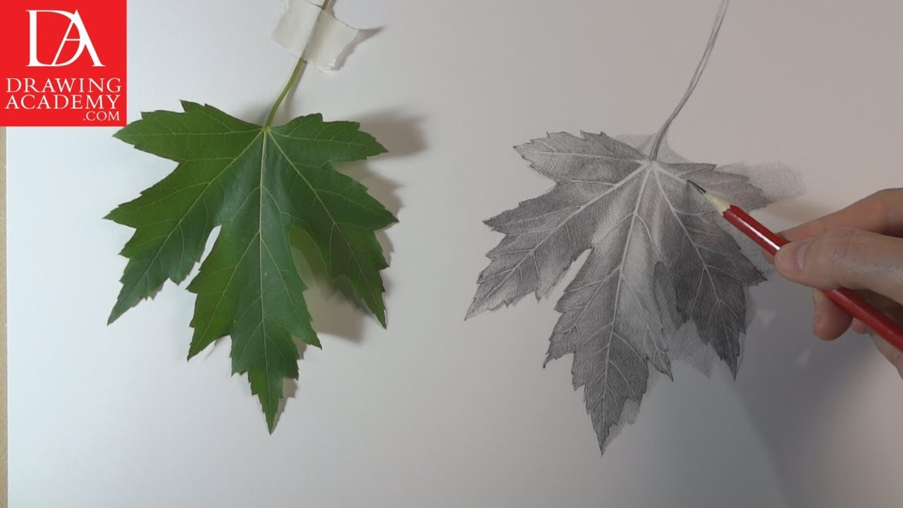 1280x720 How To Draw A Leaf Presented By Drawing Academy Com 28