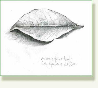 400x358 Leaf