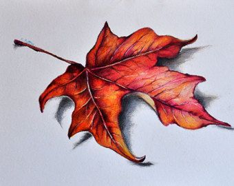 340x270 Original Colored Pencil Drawing, Red Maple Leaf, Botanical Drawing