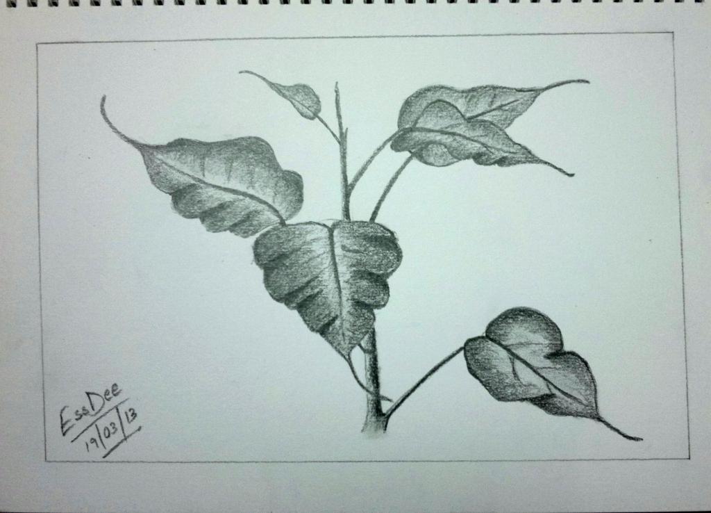 1024x738 Pencil Drawings Of Leaves Sketch Leaves Random Indites