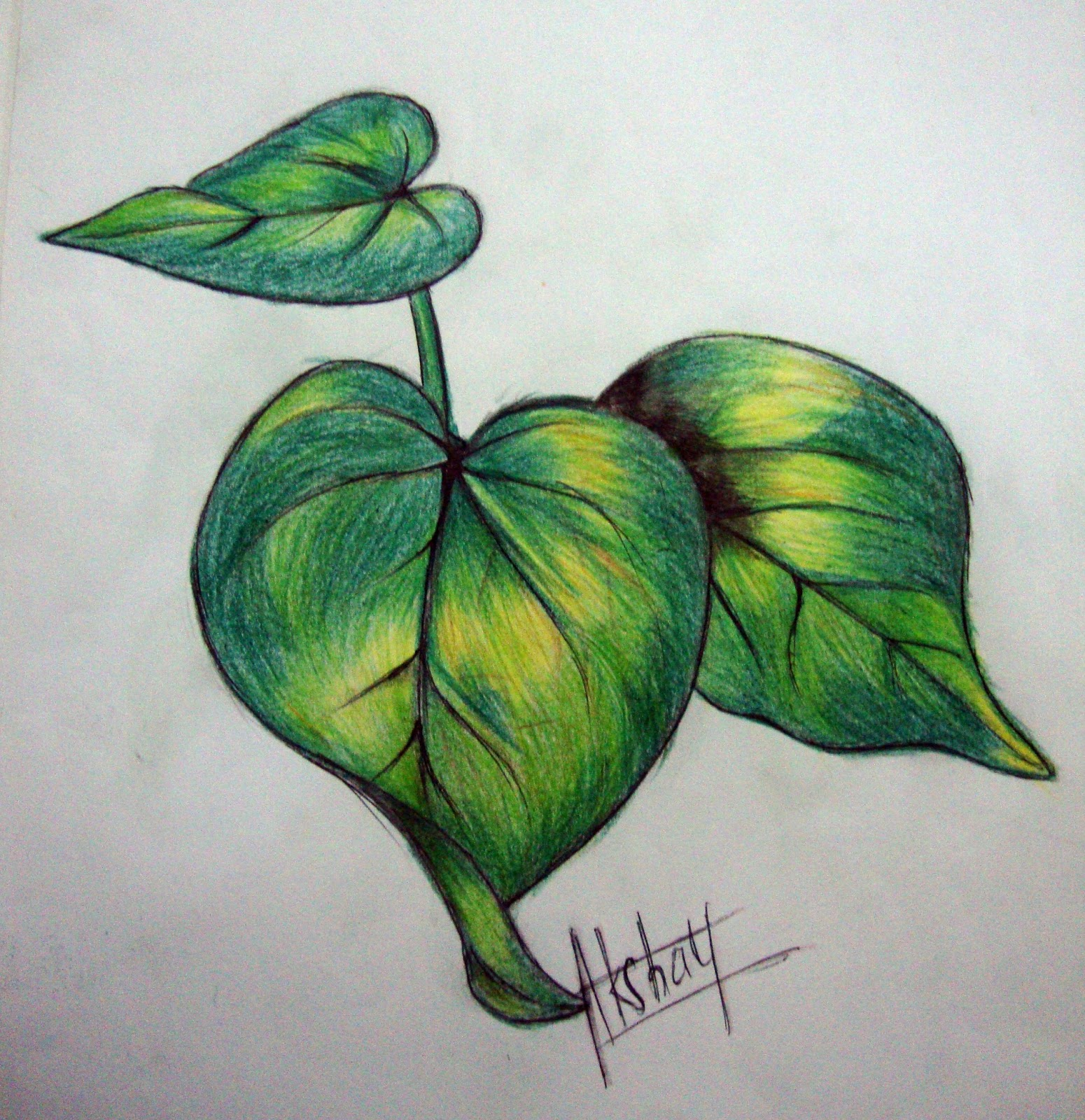 1550x1600 Akshayartcorner Colour Pencil Sketches (Leaf Study)