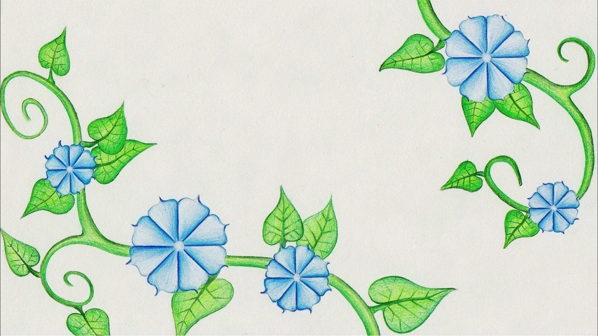 1920x1080 Flower Drawing (Morning Glory) Time Lapse!