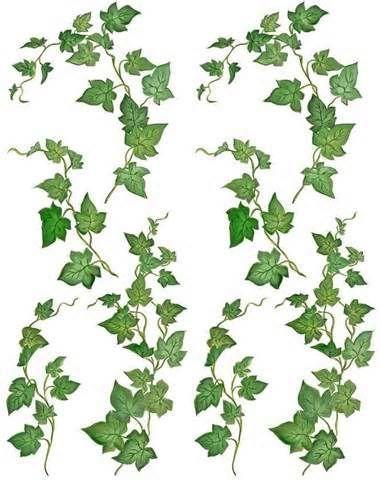 381x480 Identifying Trees And Their Leaves Vine Illustration Clipart